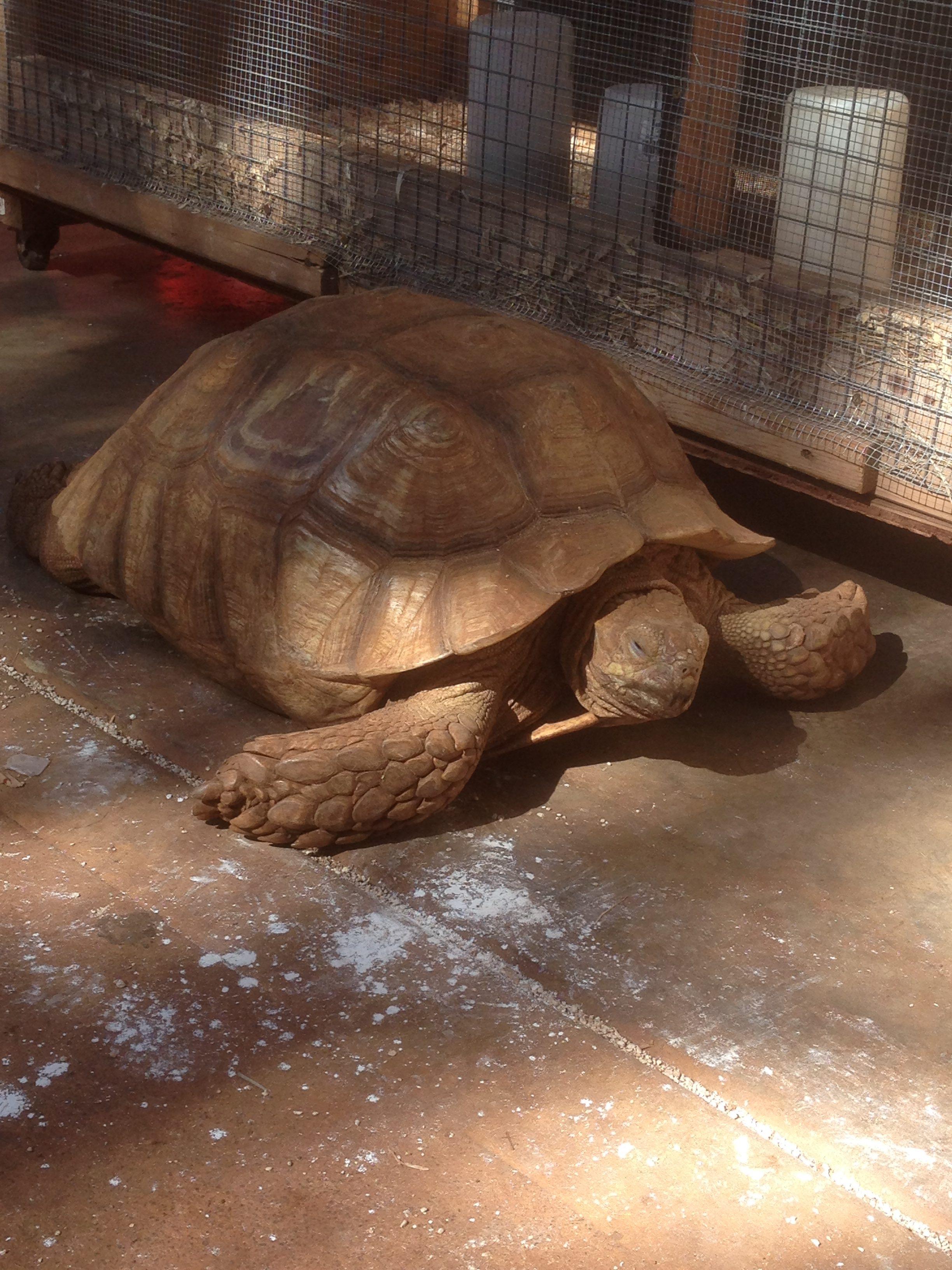 Tortoise In The Yard