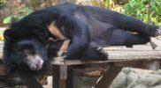 Semi-Awake Bear