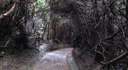 Botos Trail