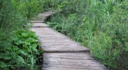 The Wooden Path