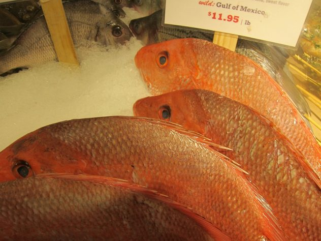 <strong>Snapper</strong> <hr> Red or yellow-tail. Grilled is best. Good meaty flavor, not to fishy, bit thicker. Smells very fishy when not fresh.