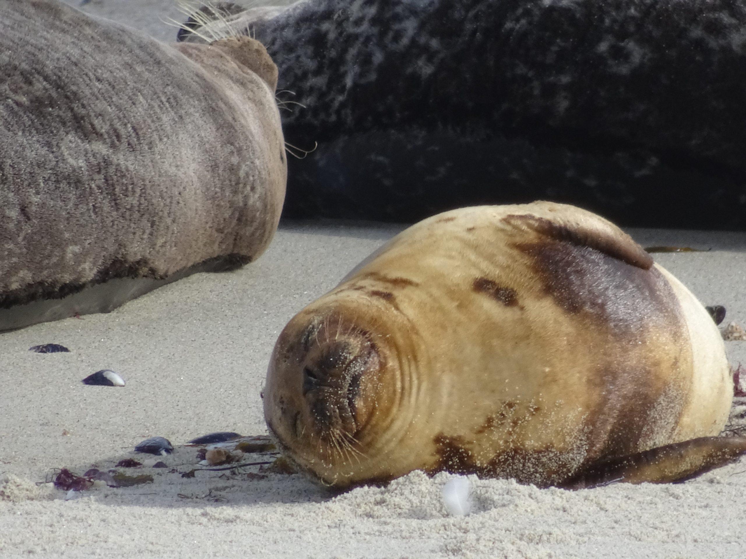 La Jolla Baby Sea Lion