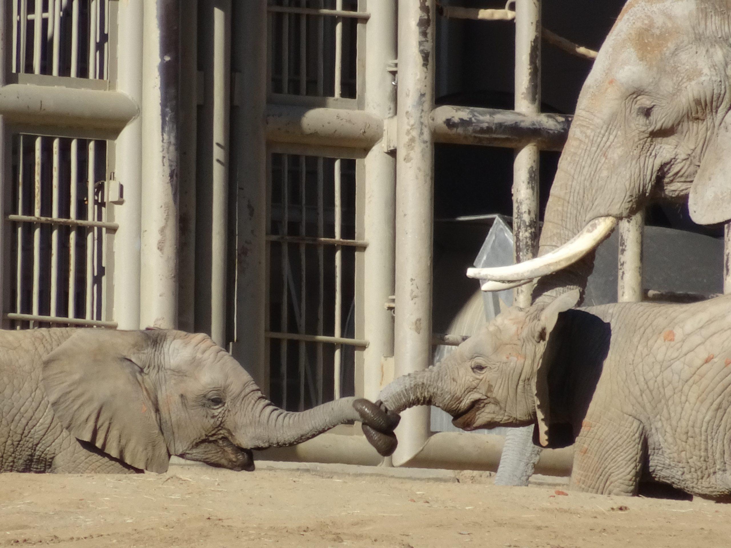Safari Park Baby Elephants