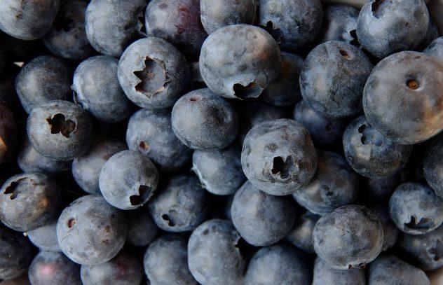 <strong>Blueberries</strong> <hr> High in fiber, antioxidants, polyphenols.
