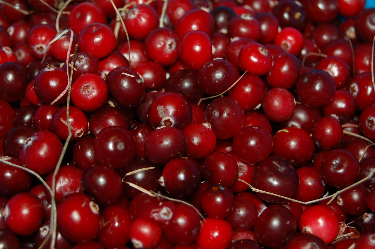 <strong>Cranberries</strong> <hr> High in antioxidants. Best ingested with something sweet, from frozen, as juice, or jellied. Helps with UTIs.