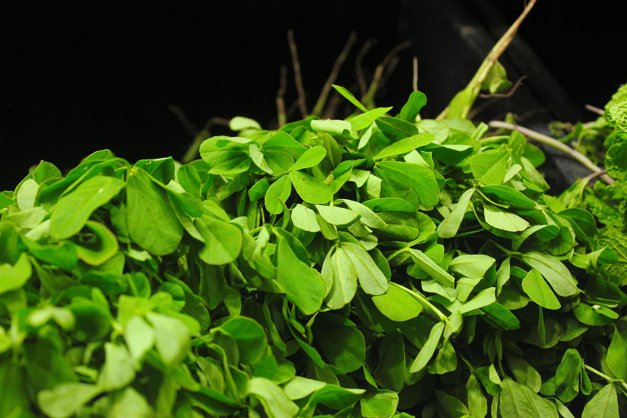 <strong>Fenugreek</strong> <hr> Prefer seeds. Cook well. Can use leaves and ground as powder too.