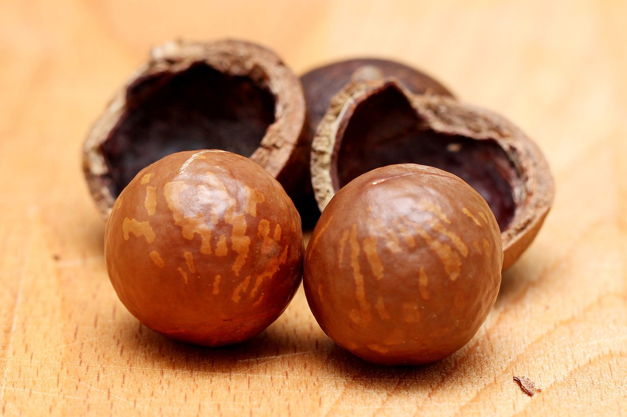 <strong>Macadamia</strong> <hr> Healthy snack or oil.