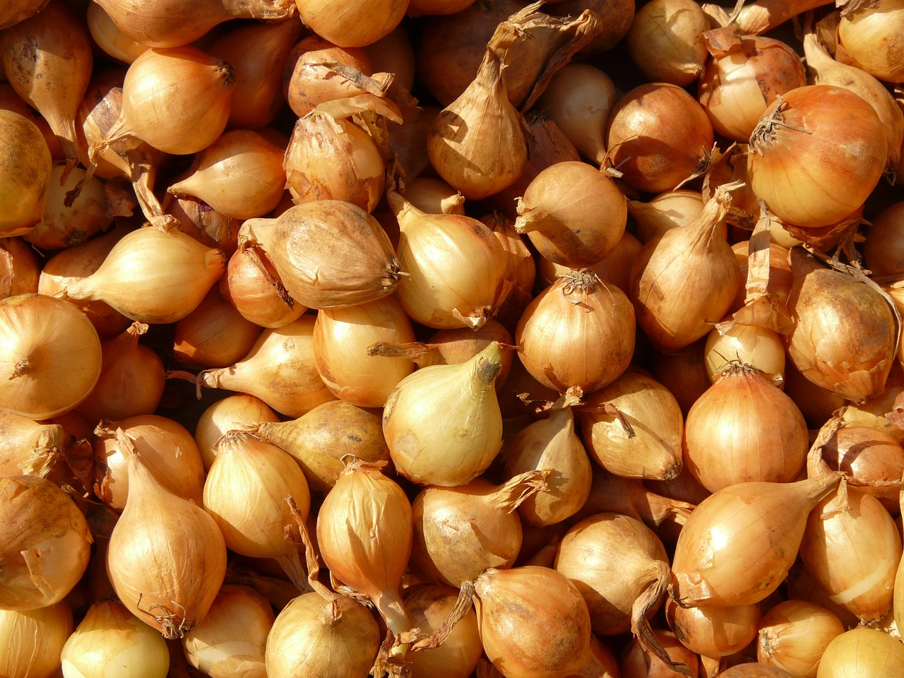 <strong>Shallots</strong> <hr> Like onions but smaller.
