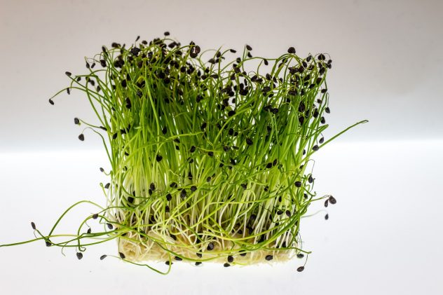 <strong>Watercress</strong> <hr> Type of sprouts. Use in salads, soups or sandwiches.