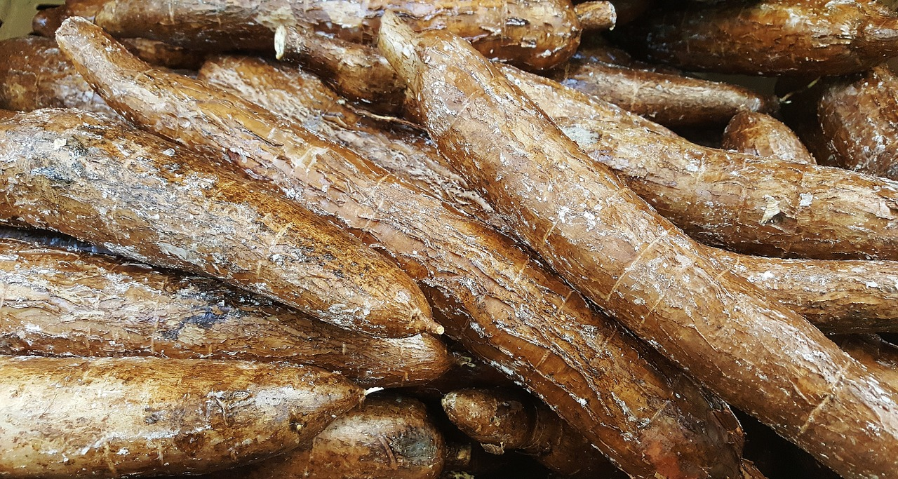 <strong>Yuca</strong> <hr> Like a potato. Eat cooked, baked, steamed, or grilled.