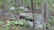 Old Rag Forest
